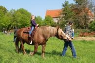 Pferd Martin