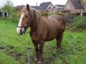 Pferd Martin von Hinrich Neumann